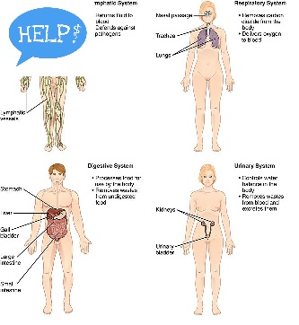 MODULE 7 BODY SYSTEMS